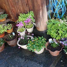 玄関先の植木鉢