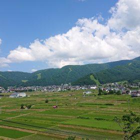 野沢の田んぼ-夏